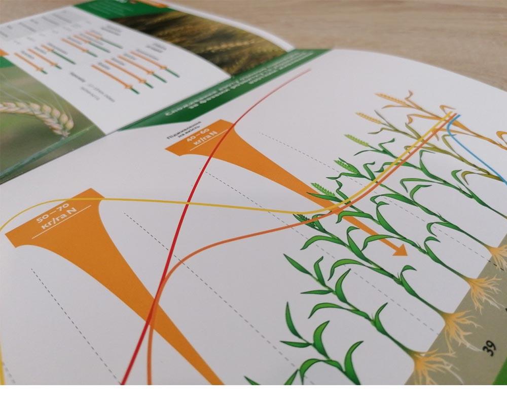 дизайн каталога зерновых